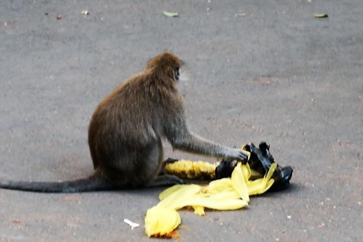 img_9212309-ubud-bali-near-monkey-forrest-park